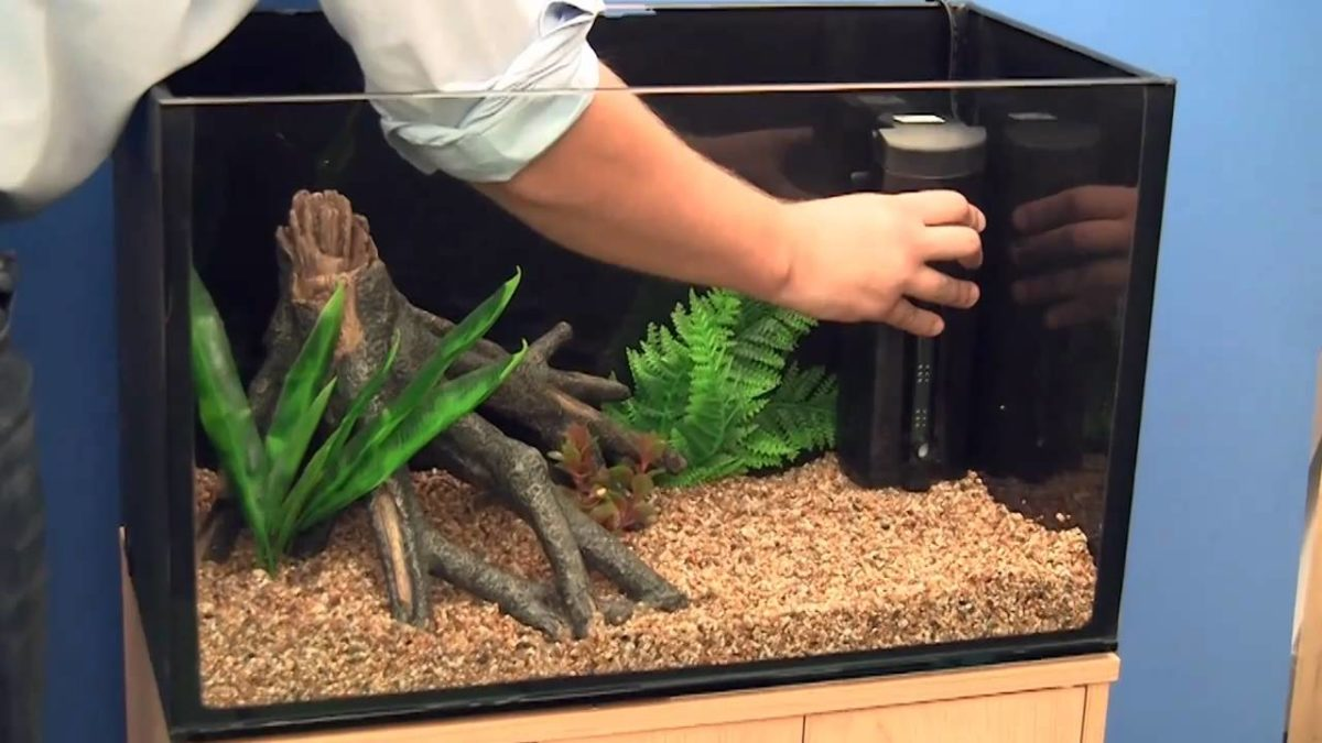 setting aquarium at home - testsure